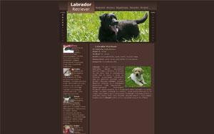 Labrador Retriever – Hodowla Czarna Demeter